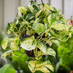 Millennials Can Improve Their Health With Exotic Angel Plants From